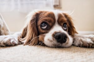 How to Remove Tough Pet Stains and Odors?